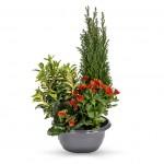 entretien-sepulture-fleurissement-Hommage